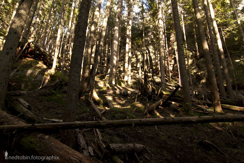 The Stawamus Chief Hike by Ned Tobin
