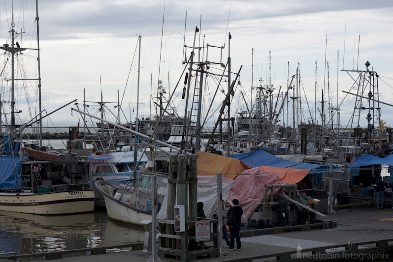 Steveston Fish Market