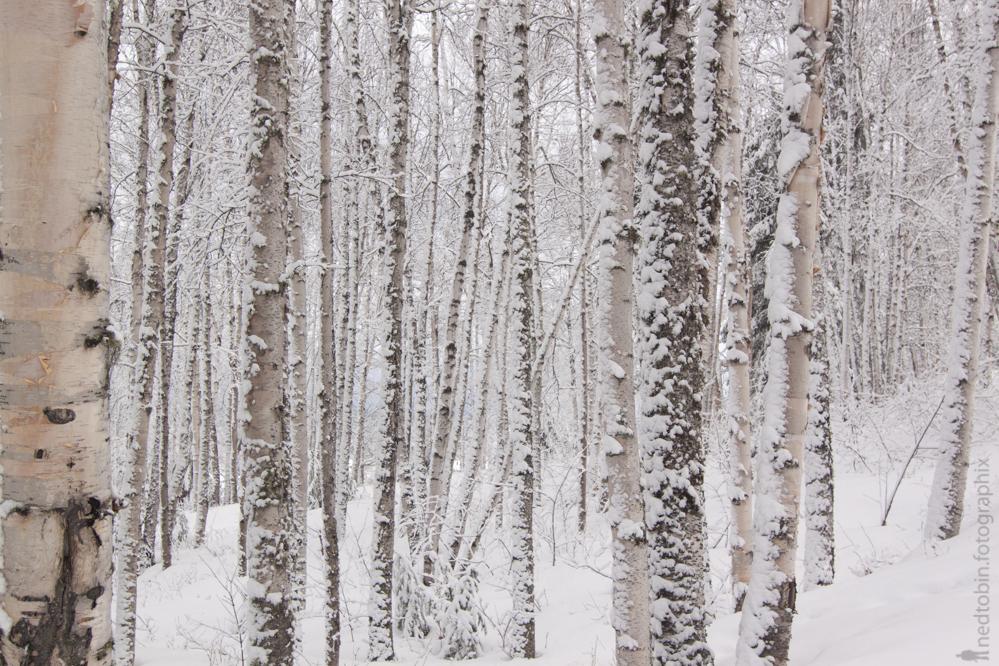 2013.02.25 - Prince George Trails