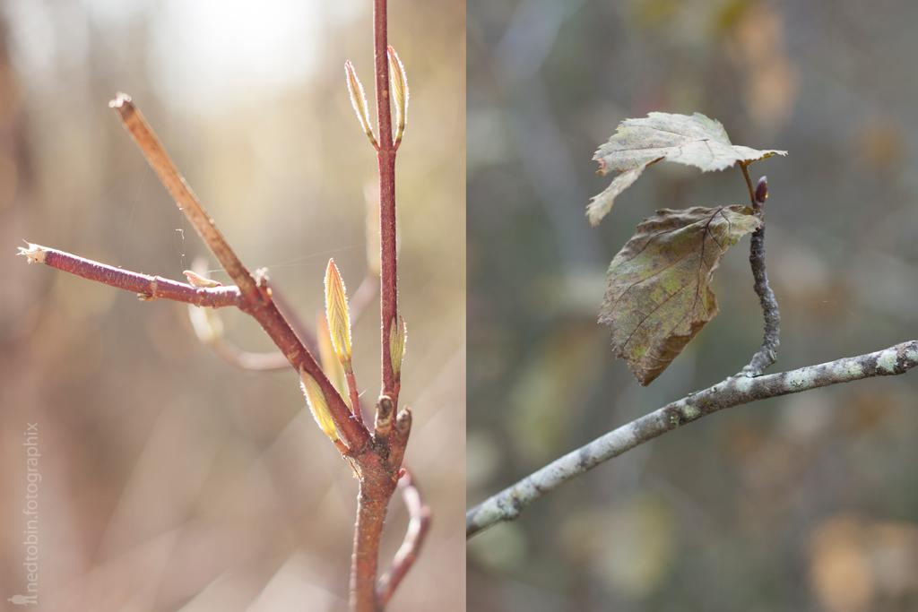 fall-spring-ii