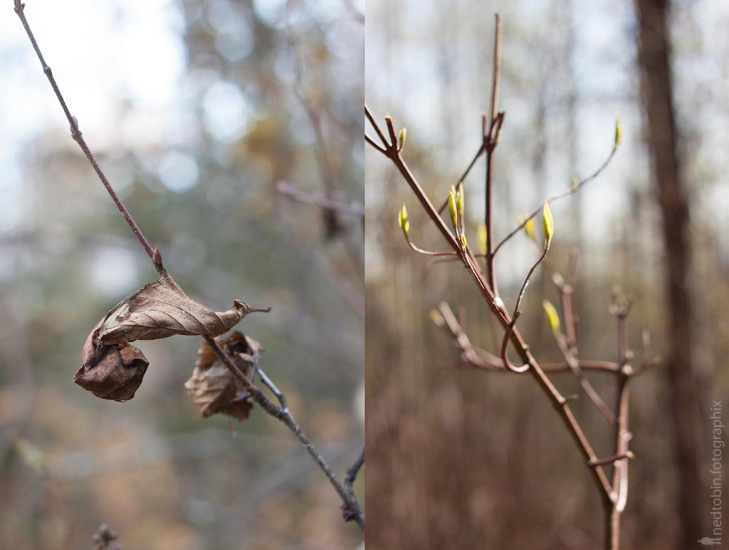 fall-spring-iii