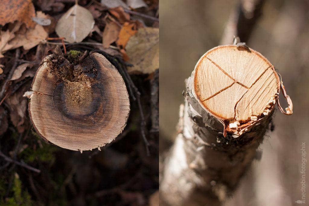 fall-spring-ix