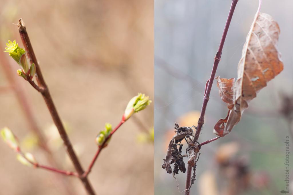 fall-spring-v