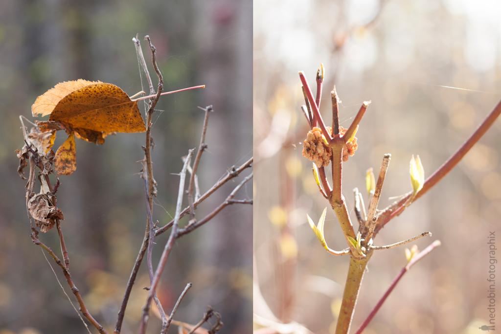 fall-spring-vi