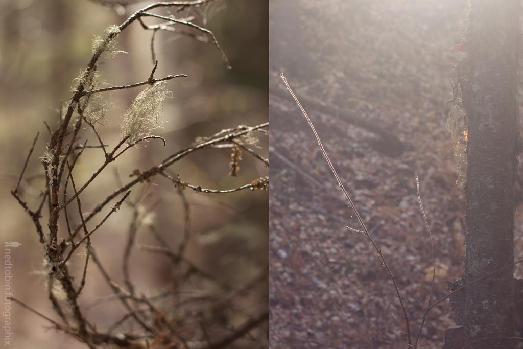 fall-spring-viii