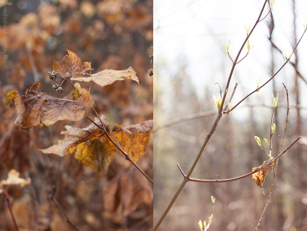 fall-spring-xi