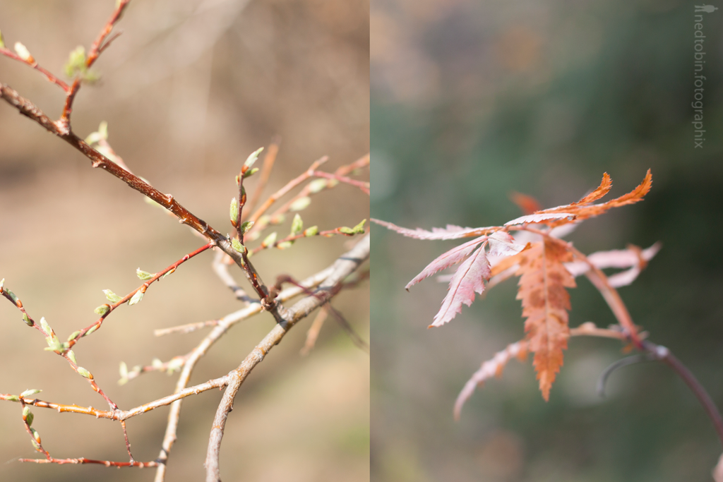 fall-spring-xii