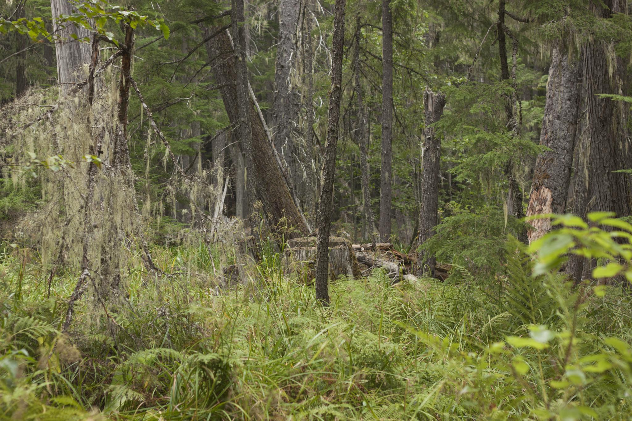 20150828 - Monashees Mushroom Picking - Ned Tobin - 77
