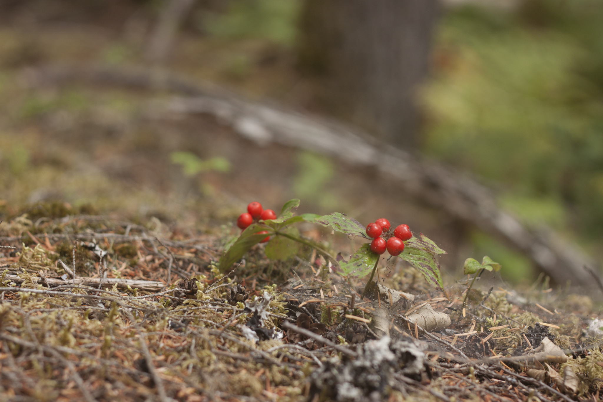20150828 - Monashees Mushroom Picking - Ned Tobin - 84