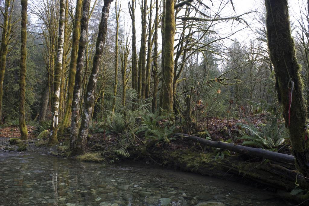 Logging roads of Vancouver Island
