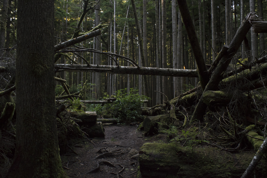 Juan de Fuca trail system, West Coast of Vancouver Island