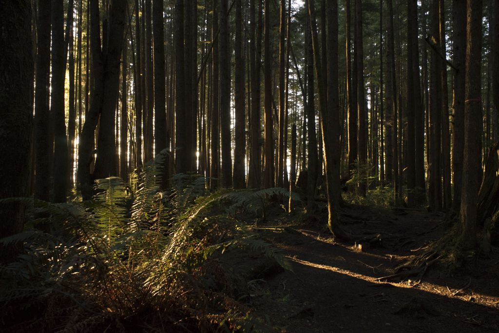 Juan de Fuca trail system, West Coast of Vancouver Island
