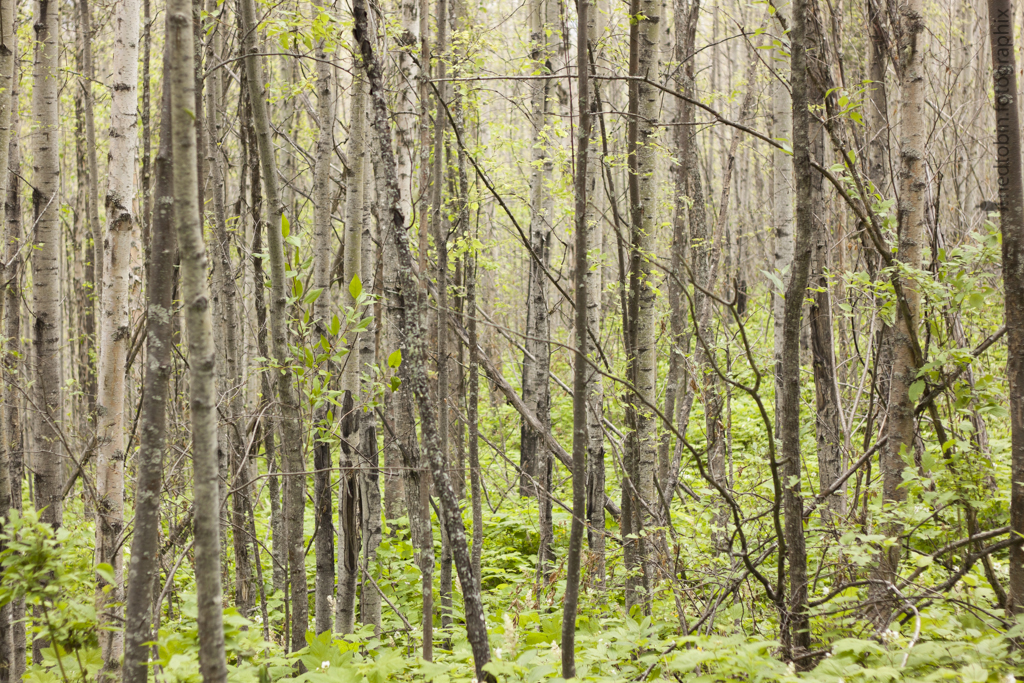 A walk through Forests for the World by Ned Tobin in Prince George British Columbia Canada