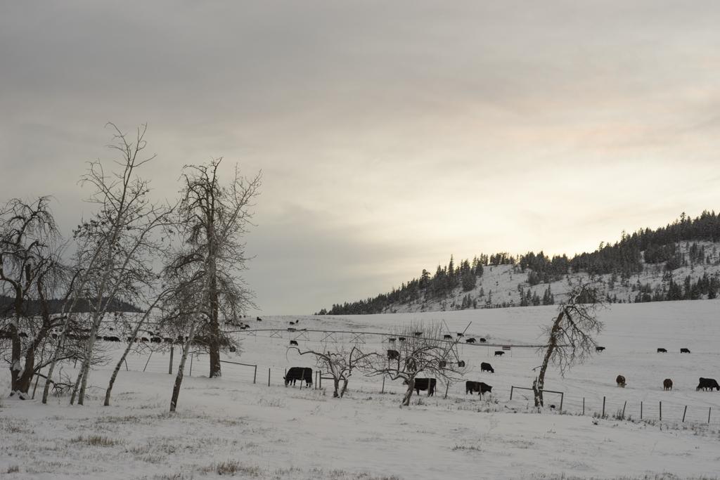 Kamloops for Christmas