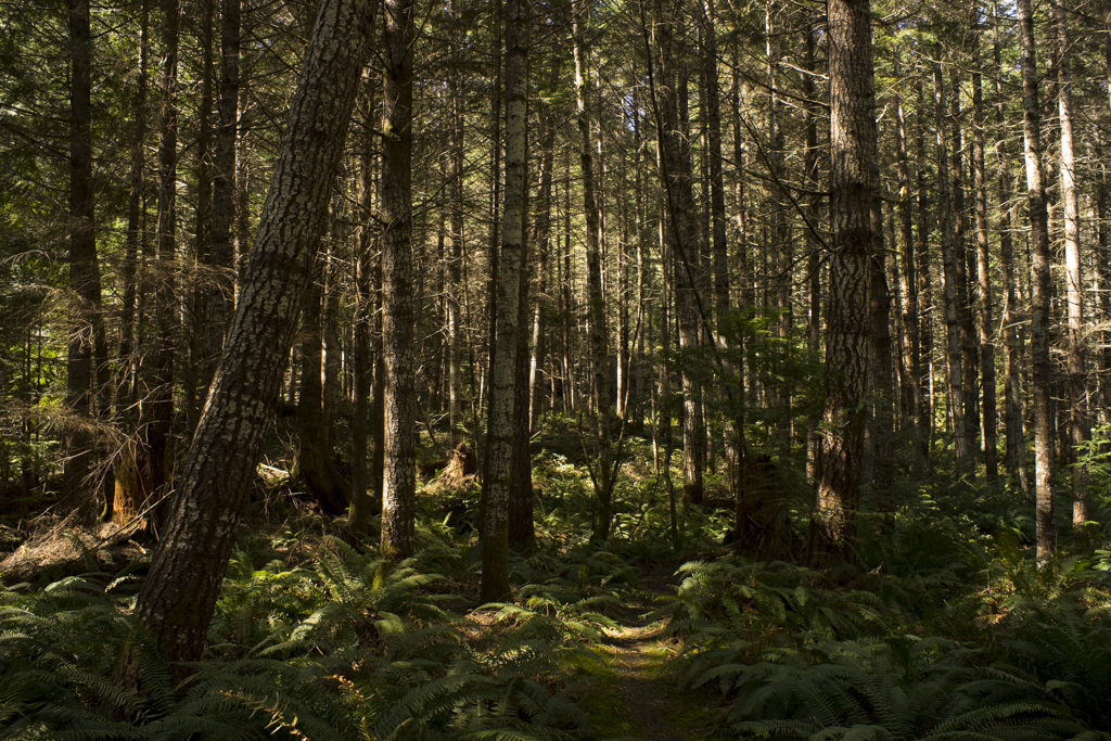 Shawnigan Lake - Ned Tobin
