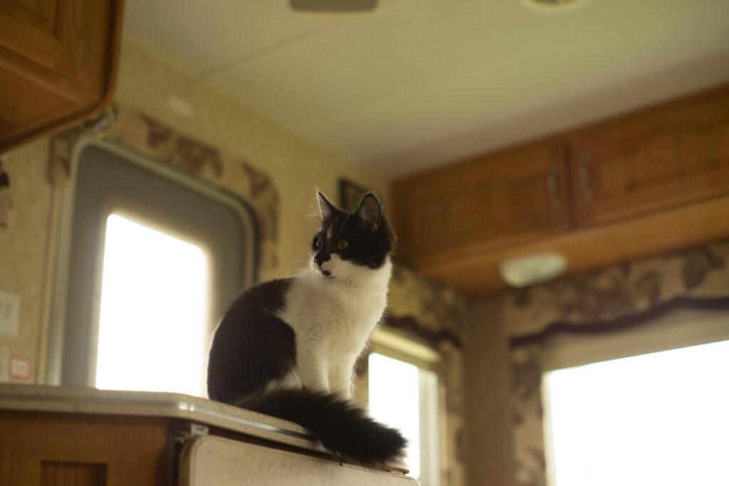 black and white cat named Luna